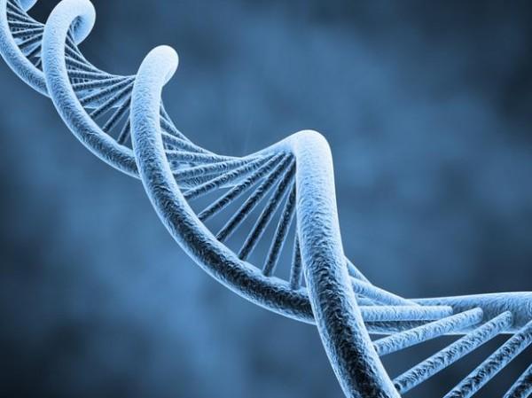 conceito-de-genetica-e-evolucao-9